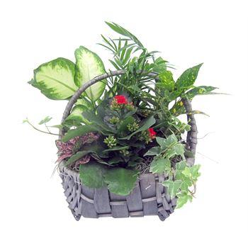 Indoor Garden Costal CSTL502 (Pack 3)
