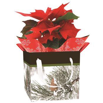 Indoor Garden Holiday Assorted Giftbox Poinsettia  (Case 15)