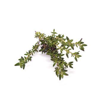 "4.5"" Herbs Organic Thyme Garden     (Cs 15)"