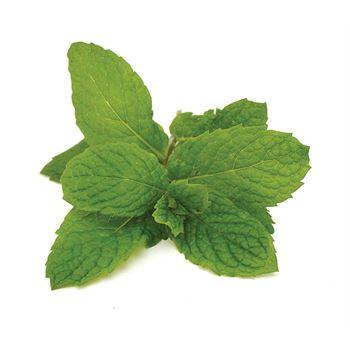 """4.33"""" Herbs      Mint Mojito    (Case 10)"""