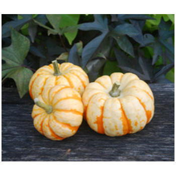 Decorative Dried Accents Tiger Striped Baby Pumpkins