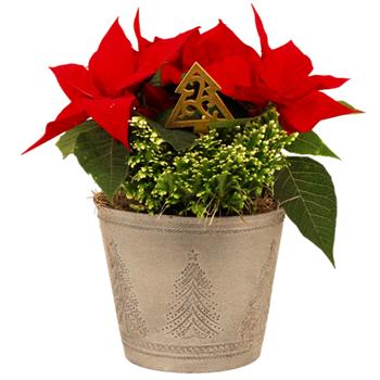 """6.5""""  Christmas Garden in Deco Pot   (Case 5)"""