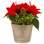 """Additional Images for 6.5""""  Christmas Garden in Deco Pot   (Case 5)"""